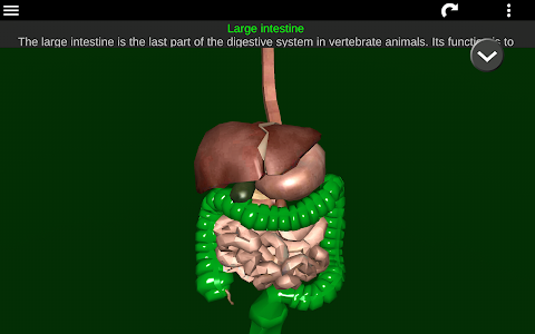 screenshot of Internal Organs in 3D (Anatomy) version 2.5