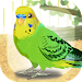 Download Parakeet Pet 1.2 APK