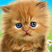 Download Talking baby cat. 1.480.0.437 APK